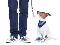 Dog owner  and dog Royalty Free Stock Photos