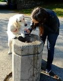 Dog and the Owner at the Drinking Fountain stock photos