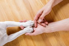 Dog and owner handshaking. Or shaking hands  and paw as a team or friendship and in love stock photos