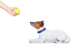 Dog and owner Stock Photos