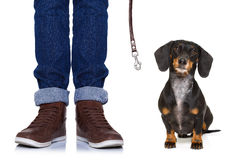 Dog and owner  with leash Stock Photos