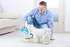Dog and owner. Little dog maltese with his owner feeding him on the floor in home Royalty Free Stock Photos