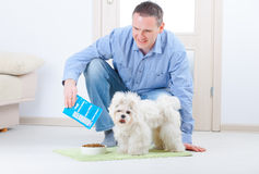 Dog and owner. Little dog maltese with his owner feeding him on the floor in home Stock Image
