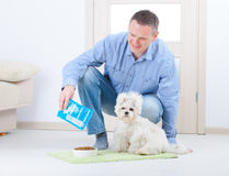 Dog and owner. Little dog maltese with his owner feeding him on the floor in home Royalty Free Stock Photography