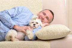 Dog and owner. Little dog maltese with his owner on the sofa in home Royalty Free Stock Images