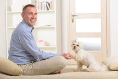 Dog and owner. Little dog maltese sitting with his owner on the sofa in home and giving a paw Stock Image