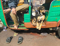Dog and Owner, New Delhi, India. A tuk-tuk driver and his dog taking a brake in the midst of the busy Main Bazaar Road Royalty Free Stock Photos