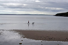 Dog and owner on Orkney Beach Stock Photo