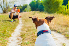 Dog and owner playing. With ball , toy or disc outdoors, dog is  waiting  and ready to play Royalty Free Stock Image