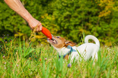 Dog and owner playing Royalty Free Stock Photography