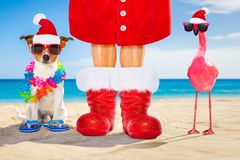 Dog and owner as santa claus on christmas at the beach. Dog and owner sitting close together at the beach on summer christmas vacation holidays, wearing a santa royalty free stock image