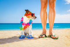 Dog and owner  summer holidays Royalty Free Stock Photography