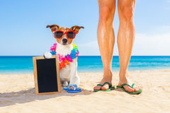 Dog and owner  summer holidays Royalty Free Stock Photos