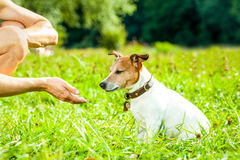 Dog and owner training Royalty Free Stock Image