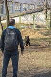 Dog with the owner on the training site in clear spring weather. stock photo