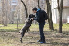 Dog with the owner on the training site in clear spring weather. stock photography