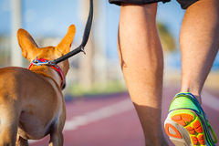 Dog and owner walking Royalty Free Stock Photo