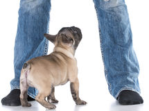 Dog at owners feet Stock Photos