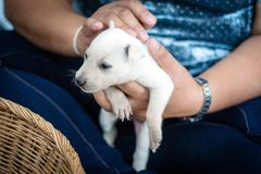 Dog owners are patting their puppies. With tenderness and pride Royalty Free Stock Photo