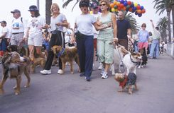 Dog owners taking their pets for a walk Royalty Free Stock Photography