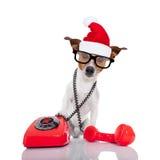 Dog på den telefonjulsanta hatten Fotografering för Bildbyråer