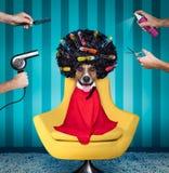 Dog på frisörsalongen arkivbild