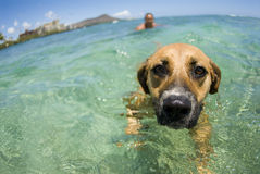 Dog paddle stock image