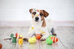 Dog with painted Easter eggs. One pet at home Royalty Free Stock Photography