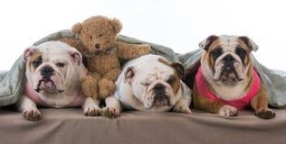 Dog pajama party Royalty Free Stock Photo