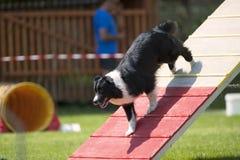 Dog on palisade Stock Photo