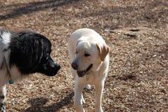 Dog Pals Stock Photo
