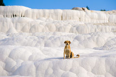 Dog in Pamukkale Stock Photography