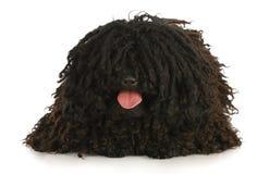 Dog panting royalty free stock image