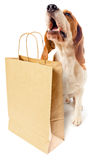 Dog with paper bag Royalty Free Stock Images