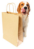 Dog with paper bag Royalty Free Stock Image