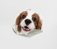 Dog and paper Royalty Free Stock Photo
