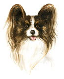 The dog Papillon. Image of a thoroughbred dog. Watercolor painting Stock Images