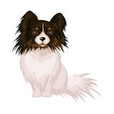 The dog Papillon Royalty Free Stock Image