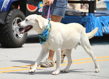Dog  in parade in small town America Stock Photos