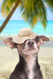 Dog in paradise beach with hat Stock Photo