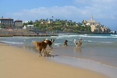 Dog paradise. Funny dogs on Beach in Charles Clore Park. Tel Aviv. Israel stock image