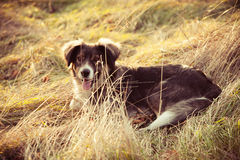 Dog. Pariah dog sit in yellow grass warm winter day retro colors Stock Photo