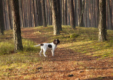 Dog In the Park Stock Photo