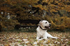 Dog in park Stock Photography