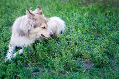 Dog in the park Royalty Free Stock Photo
