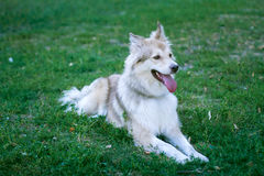 Dog in the park Stock Image