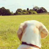Dog in a Park Royalty Free Stock Photography