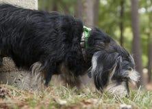 Dog at Park. Black and tan dog playing at the park Royalty Free Stock Photography