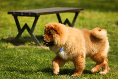 Dog in park Stock Images
