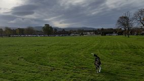 Dog in a park and clouded sky Royalty Free Stock Image